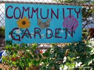 Town of Main brook Community Garden